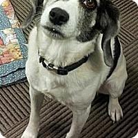 Adopt A Pet :: LUCY (COURTESY POSTING) - Phoenix, AZ