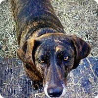 Adopt A Pet :: Abigail - Sunnyvale, CA