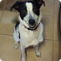 Adopt A Pet :: Indy - Hamilton, ON