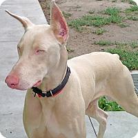 Adopt A Pet :: Casper - Burbank, CA