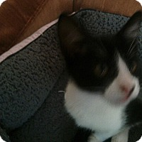 Adopt A Pet :: Sakie - Monroe, GA