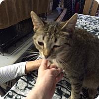 Adopt A Pet :: Honor - Byron Center, MI