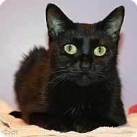 Adopt A Pet :: Lilith - Ann Arbor, MI