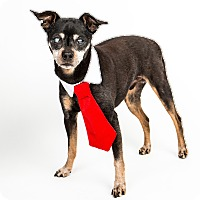 Adopt A Pet :: Dallas - Denver, CO