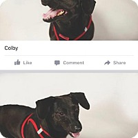 Adopt A Pet :: Colbie - Jacksonville, FL
