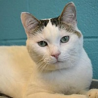 Adopt A Pet :: Teddy *Special Adoption Fee - Akron, OH