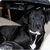 Adopt A Pet :: Finney - Newport, VT