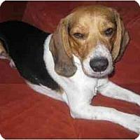 Adopt A Pet :: Rhett - Phoenix, AZ