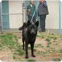 Adopt A Pet :: Raquel - Marysville, CA