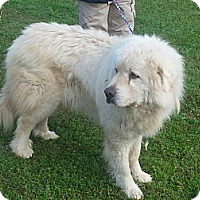Adopt A Pet :: Muff - Largo, FL