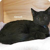 Adopt A Pet :: Spook - Dover, OH