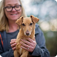 Adopt A Pet :: Tee Bone - Vista, CA