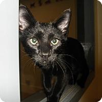 Adopt A Pet :: Buoy - Milwaukee, WI