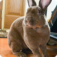 Adopt A Pet :: Micky - Moneta, VA