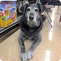 Adopt A Pet :: Jesse James - Sparta, NJ