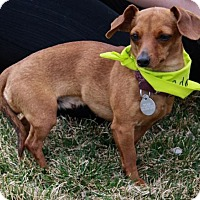 Adopt A Pet :: M'Lynn - Spanish Fork, UT