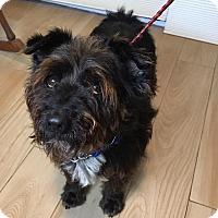 Adopt A Pet :: Ferguson - Redondo Beach, CA