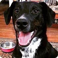 Adopt A Pet :: Marty - Lexington, KY