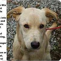 Adopt A Pet :: # 654-09 @ Animal Shelter - Zanesville, OH