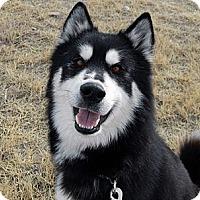 Adopt A Pet :: Elwood - Cheyenne, WY