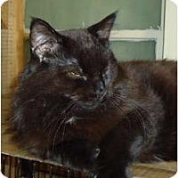 Adopt A Pet :: Binks - Elmira, ON