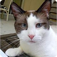 Adopt A Pet :: Twilight - Naples, FL