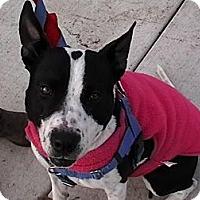 Adopt A Pet :: Estella - Eugene, OR