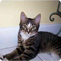 Adopt A Pet :: Trey - Arlington, VA