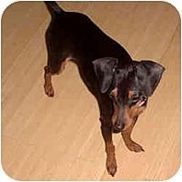 Adopt A Pet :: MINI - Springvale, ME