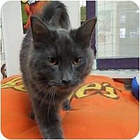 Adopt A Pet :: Hewey - Phoenix, AZ