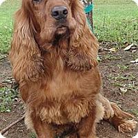 Adopt A Pet :: Marco - Sugarland, TX