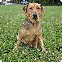 Adopt A Pet :: Wendy - Hamburg, PA