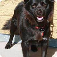 Adopt A Pet :: Ailee - Gilbert, AZ