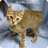 Adopt A Pet :: Heidi - Bentonville, AR