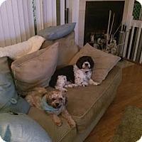 Adopt A Pet :: BB & Joey - Acushnet, MA