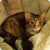 Adopt A Pet :: Princess - brewerton, NY