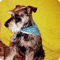 Adopt A Pet :: Brody - Hazard, KY