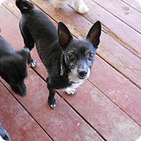 Adopt A Pet :: Jack - dewey, AZ