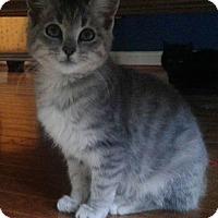 Adopt A Pet :: Lex - Adoption Pending - Arlington, VA