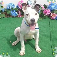 Adopt A Pet :: BUCKY - Marietta, GA