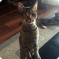 Adopt A Pet :: Tisha - Lombard, IL