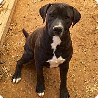 Adopt A Pet :: Junior - Charlotte, NC