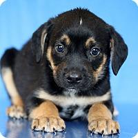 Adopt A Pet :: Maryland - Waldorf, MD