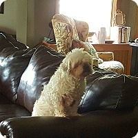 Adopt A Pet :: Lorenzo - Freeport, NY