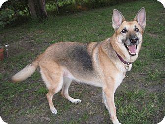 German Shepherd Dog Dog for adoption in Green Cove Springs, Florida - Umeko