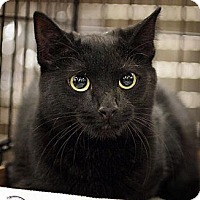 Adopt A Pet :: Eliza - Fairfax Station, VA