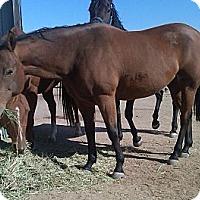 Adopt A Pet :: Adara - Larskpur, CO