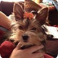Adopt A Pet :: Trinket - Cleveland, OH
