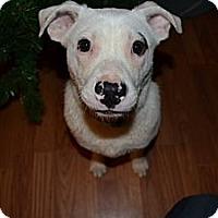 Adopt A Pet :: Casper - Hagerstown, MD