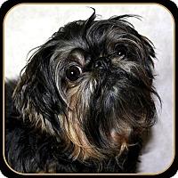 Adopt A Pet :: TABITHA ANN - ADOPTION PENDING - Little Rock, AR